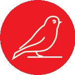 Anima-Strath Icon Bird