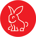 Anima-Strath Icon Bunny