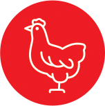 Anima-Strath Icon Chicken