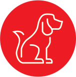 Anima-Strath Icon Dog
