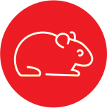 Anima-Strath Icon Hamster
