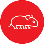 Anima-Strath Icon Mouse