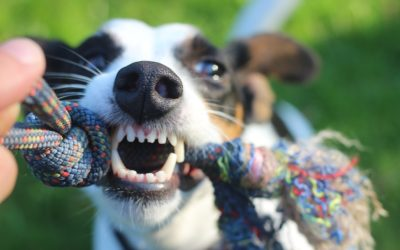 Boredom busters for you and your dog